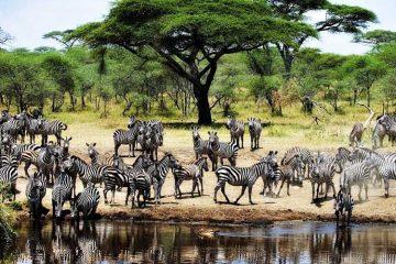 ultimate luxury safari experience
