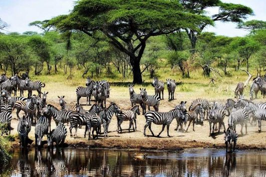 ultimate luxury safari experience