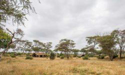 Tents at Kuro Tarangire