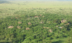 birdseye-view-of-lewa-wilderness