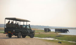 Chobe_under_canvas_gamedrive1.jpg