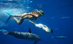 dolphinswimming_maradiva