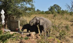 elephants-drinking-at-ngoma-pool