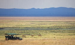 game_drive-katavi-national_park