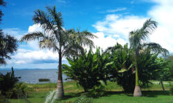 gardens_on_the_lake_victoria_mwanza