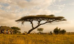 namiri-plains-guest-tent-outdoor-area