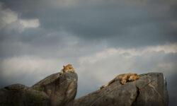 namiri-plains-lioness-rock-formation