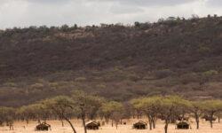 serengeti-kati-kati