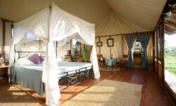 standard-tent