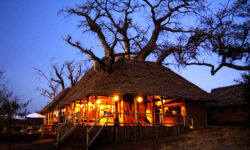Tarangire Treetop by night