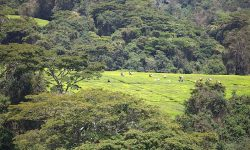 tea-plantation_mufindi