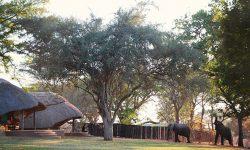 ff0259_imbabala_safari_lodge_zimbabwe