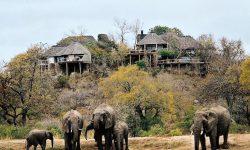 Lodge overlooking Elephants at a waterhole