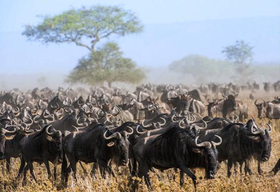 Botswana vs Tanzania Safari