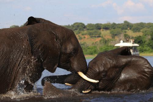 Safari Botswana vs Tanzania