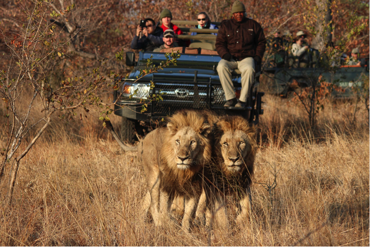 safari-tour