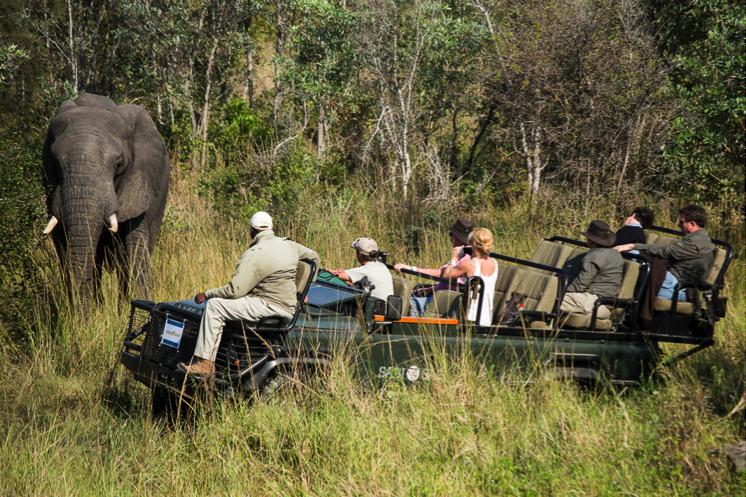 safari-view