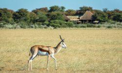 Kalahari_2015-03-2e