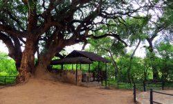 Molema Bush Camp 2