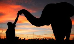 Africa; Botswana; Okavango Delta; Sanctuary Baines' Camp; Elephant interaction