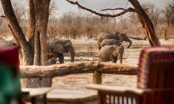 Hyena Pan - Deck & Ele's