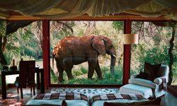 Sanctuary Makanyane Safari Lodge -Makanyane Elephant