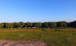 zambezi_expeditions_301