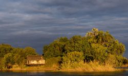 Sindabezi Island, part of Tongabezi Lodge with Lala palm (Hyphaene coriacea). Victoria Falls. Livingstone. Zambia