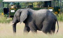 Elephant Express - Zimbabwe