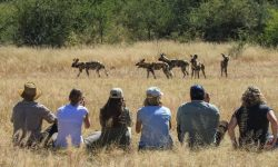 walking safari in Hwange