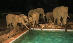Elephants at night - Nehimba Lodge