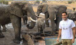 Elephant experience at Nehimba Lodge