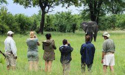 Walking Safari - Bomani Lodge - Hwange