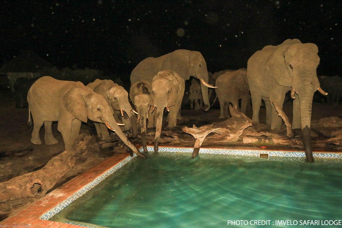 Zimbabwe Safari Adventure With Gorges Lodge & Imvelo