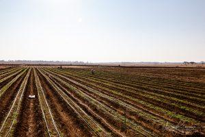 Lingfield farm Gweru