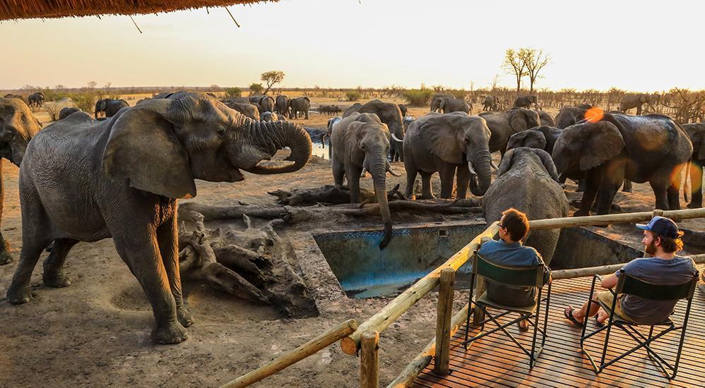 Zimbabwe Safari Adventure